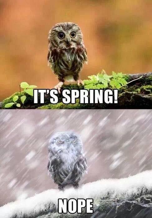 it's spring...nope