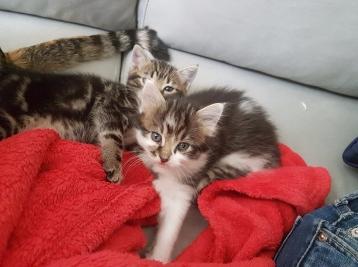 kittens foster family